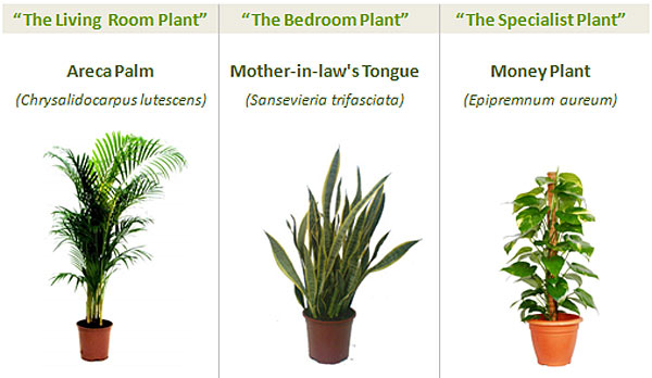 The best indoor plants for your home office get fresh air - Good household plants ...